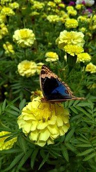 Nature, Butterfly, Flower, Yellow, Green