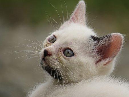 Cat, Feline, Pet, Cat Head, Colombia