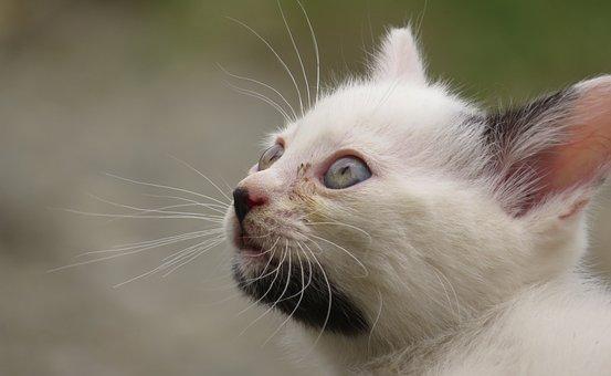 Animal, Cat, Domestic, Feline, Colombia