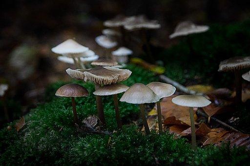 Mushrooms, Forest, Dark, Background, Mushroom Picking