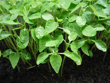 Plants, Green, Leaf, Green Leafs, Leaves, Growing Plant