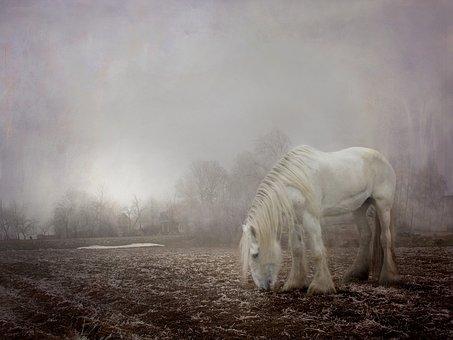 Halloween, Spooky, Fog, Foggy, Winter, White, Horse
