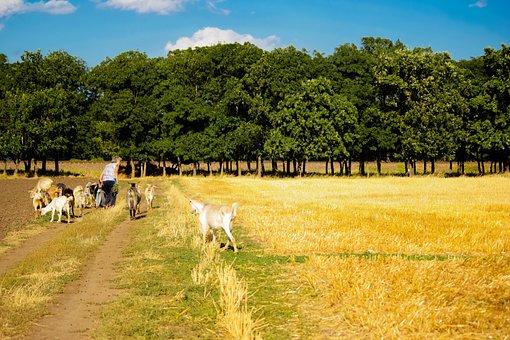 Field, Cattle, Village, Goats, Home, Meadow