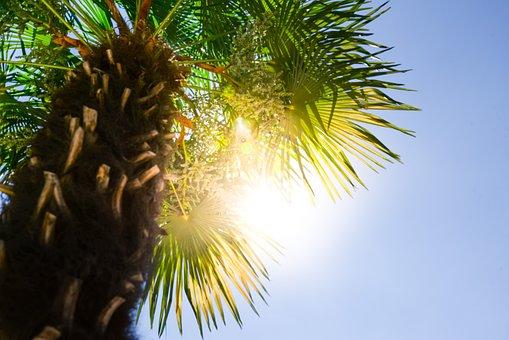 Palm, Tree, Sun, Summer, Tropical, Beach, Sky, Travel