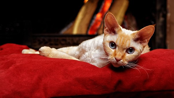Devon Rex, Tomcat, Cat, Pillow, Fireplace, Chimney
