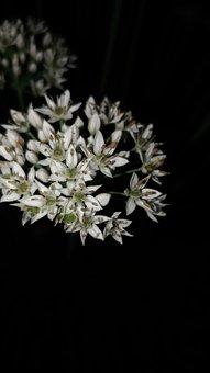 Night Shots, Tiny Flowers, White Flowers