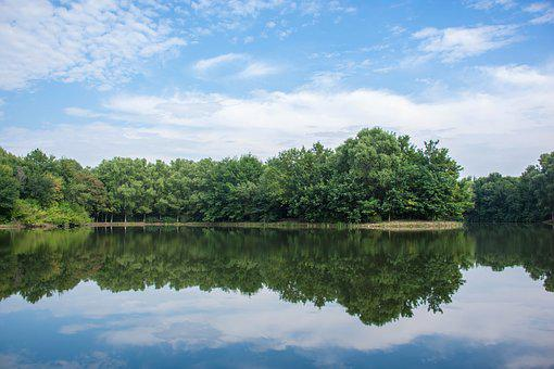 The Scenery, Forest, Park, Tree, Reflection, Cloud