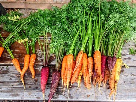 Carrot, Carrots, Produce, Food, Vegetable, Fresh