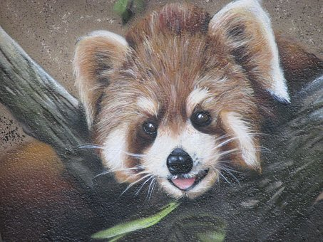 Raccoon, Wall Art, Wall, Zoo, Berlin, Animal, Cute