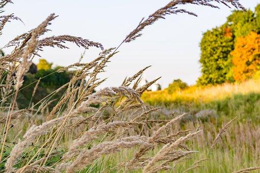 Background, Summer, Beautiful, Grass, Dry, Autumn