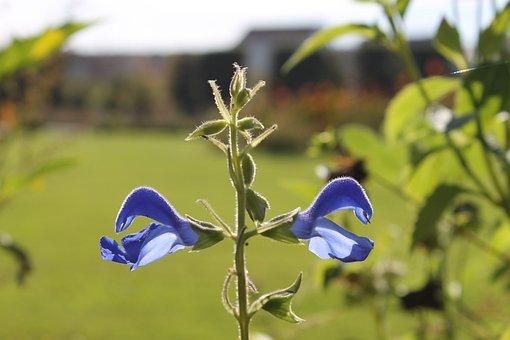 Augarten, Vienna, Park, Augarten Palais, Flowers, Blue