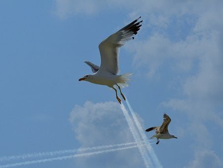 Seagulls, Traces, Funny, Sky, Flight, Cloud, Stol