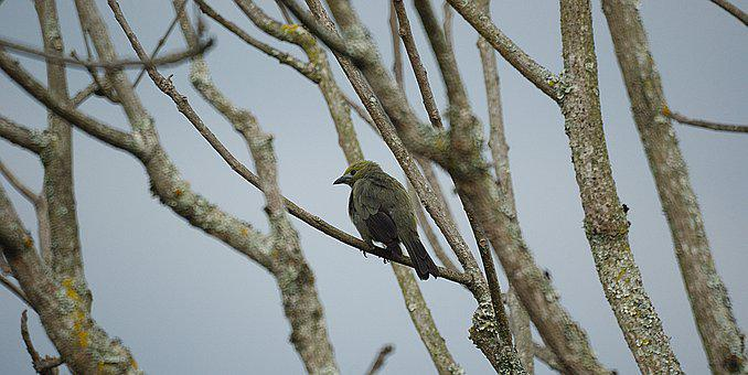 Ave, Bird, Nature, Tree, Colombia