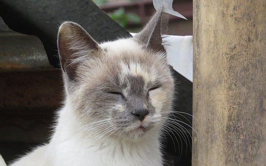 Cat, Feline, Domestic Animal, Pet, Colombia