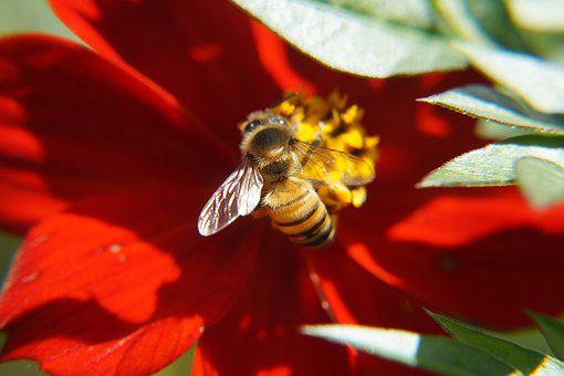 Bees, Pollination, Nature, Flowers, Insects, Petals