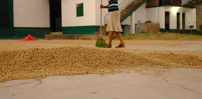 Pulped Natural, Semi-dry, Honey Process Coffee, Coffee
