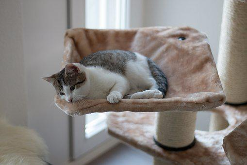 Kitten, Cat Tree, Mieze, Sleep, Cute, Lazy, Pet, Sweet