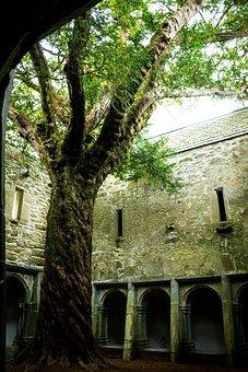 Muckross Abbey, Muckross, Tree, Killarney, Ruin