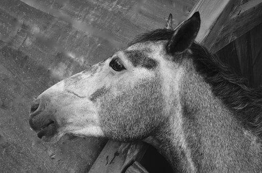 Horse, Stable, Soft, Domestic Animal, Horseback Riding