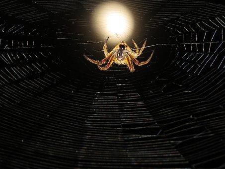 Macro, Web, Spider Hunter, Night, Colombia