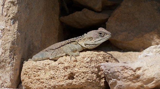 Lizard, Sun, Ruins