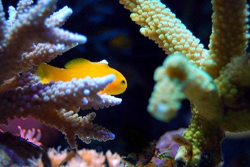 Coral, Reef, Sea, Underwater, Fish, Ocean, Tropical