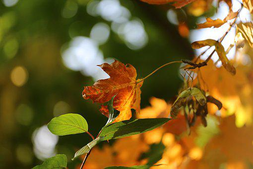 Autumn, Beauty, Paint, Leaves, Yellow, Red, Russia