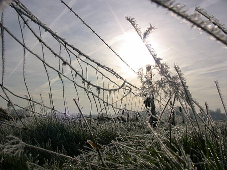 Ice, Winter, Fence, Frost, Cold, Frozen, Winter Magic