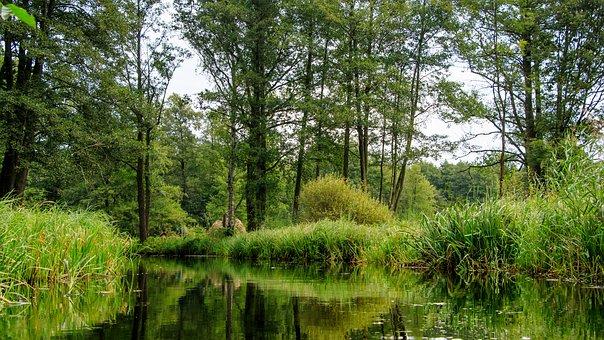 Spreewald, Channels, Depth, Trees, Spree, Landscape