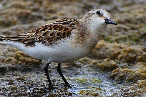 Animal, Waterside, Grass, Little Bird