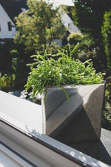 Plans, Window, Window Sill, Nature, Outdoors, Green