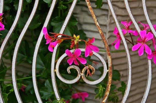 Background, Grid, Flowers, Metal Begonias, Overgrown