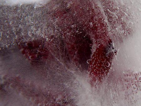 Red Rose, Ice, Air Bubbles, Frozen, Red, Nature