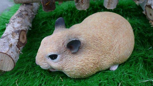 Rabbit, Animal, Light Brown, Possierlich, Pet