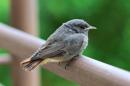 Bird, Perched, Nature