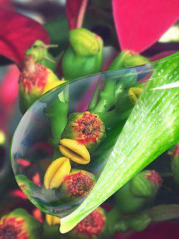 Vegetation, Water, Drop Of Water, Plant, Flower, Rain