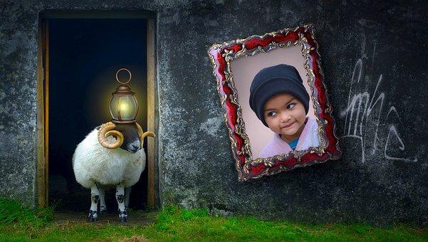 Composing, Sheep, Animal, Door, Home, Input, Image