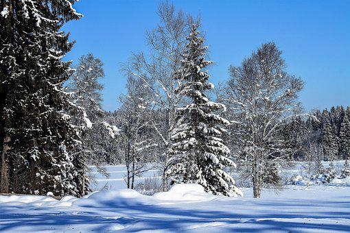 Winter, Trees, Tree, Snow, Landscape, Cold, Nature