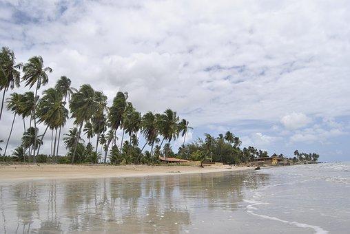 Coconut Tree, Beach, Coconut, Palm, Summer, Tropical