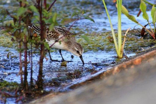 Animal, River, Waterside, Grass, Little Bird