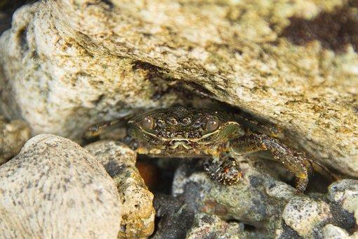 Crab, Spogebob, Ocean, Sea, Animal, Seafood, Sea Wild