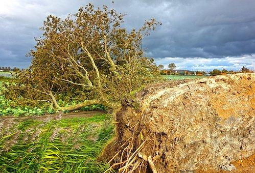 North Sea, Forward, Storm Sebastian, Tree, Root