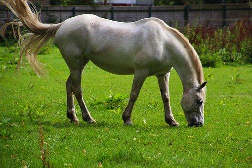 Horse, Animal, Field, Green, Nature, Farm, Equestrian