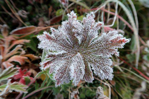 The First Frost, Early Autumn, Indian Summer, Rime