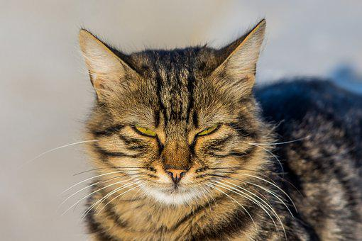 Cat, Animal, Pet, Kitten, Domestic, Kitty