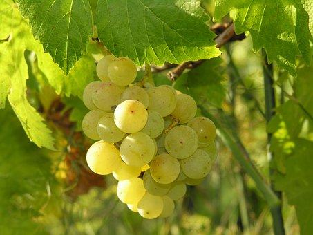 Grapes, Fruit, Food, Autumn Fruits, Acini, Leaves