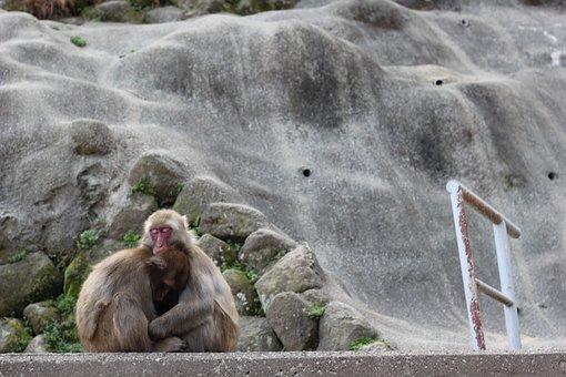 Monkey, Animal, Zoo