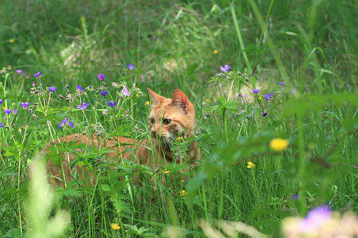 Summer, Cat, Nature, Animals, Fur, Pets, Flowers