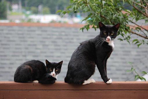 Cat, Pet, Baby Cats