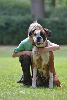 Boxer, German Boxer, Dog Look, Pet, Dog, Boxer Dog